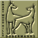 Smart Wood Hills dobermanns