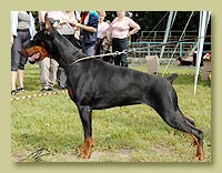Dobermann Smart Wood Hills Xantia (S'Lichobor Deodar x Smart Wood Hills Integra)